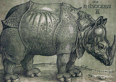 Engraving Drawing -  The Rhinoceros by Albrecht Durer
