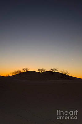 Evening Photograph -  The Trees On The Top Of A Sand Dune by Ellie Teramoto