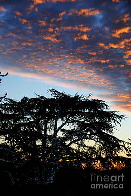 Photograph -  Tree Lights And Sunset by Jacqueline M Lewis