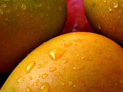 Photograph -  Tres Mangoes by Greg Allore
