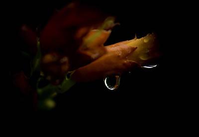 Photograph -  Trumpet Drops by Rae Ann  M Garrett