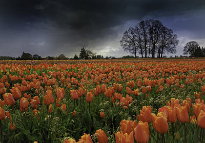 Tulip Festival Art Print by Jean-Jacques Thebault