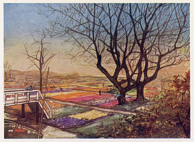 Tulip Drawing -  Tulip-fields Near Haarlem by Mary Evans Picture Library