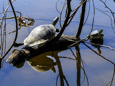 Turtle Doing Yoga  Art Print