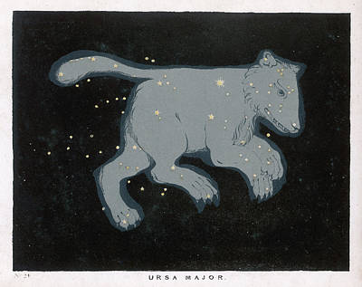 First Star Drawing -  Ursa Major  The Constellation by Mary Evans Picture Library