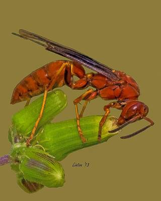 Wasp.insect Digital Art -  Wasp Macro by Larry Linton
