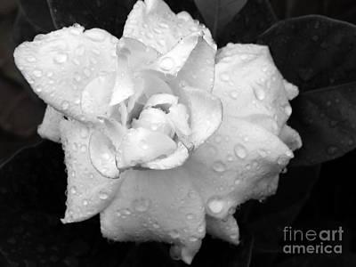 White Drops Art Print by Michelle Meenawong