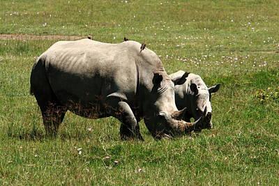 White Rhino Mother And Calf Art Print by Aidan Moran