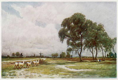 Wimbledon Common,  With Sheep Art Print