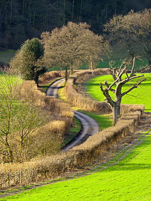 Photograph -  Winding Country Lane by Tony Murtagh