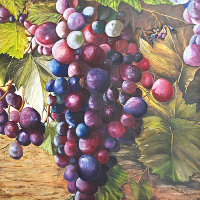 Wine Grapes On A Vine Art Print