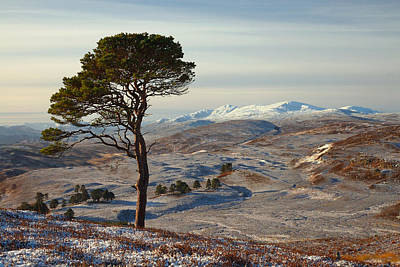 Photograph -  Winter In Strathglass by Gavin Macrae