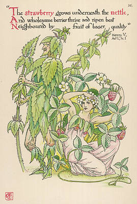 Strawberries Drawing -  With Fragaria  Nettle And Strawberry by Mary Evans Picture Library