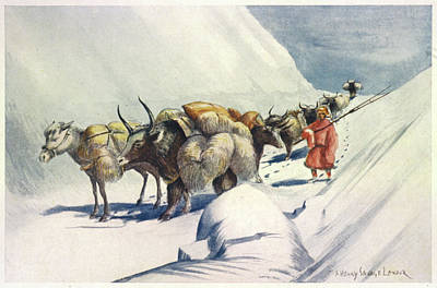 Yak Drawing -  Yaks And Ponies Carrying Wool by Mary Evans Picture Library