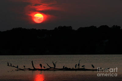 0016 White Rock Lake Dallas Texas Art Print