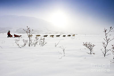Ptarmigan Valley Mushing Art Print by Jeff Schultz