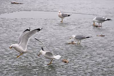 Seagull Photograph - 01 Feeding Time At Lake Erie In Ripley Ny by Michael Frank Jr