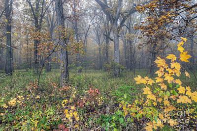 Starved Rock Wall Art - Photograph - 0133 Misty Meadow 2 by Steve Sturgill