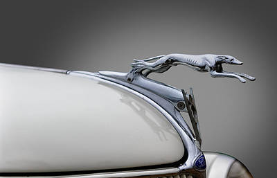 Greyhound Photograph - 1936 Ford Greyhound Hood Ornament by Frank J Benz