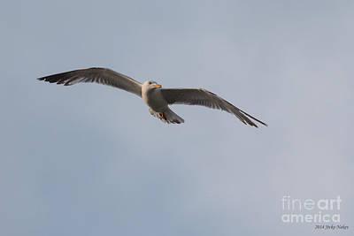New Years - 07 Yellow-legged Gull by Jivko Nakev
