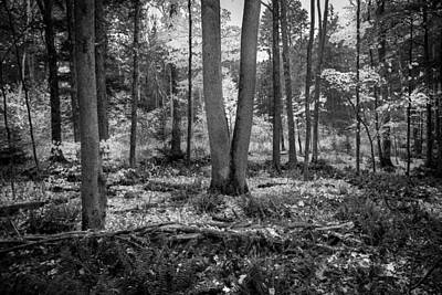 Photograph -  Fall Foliage George W Childs National Park Painted Bw   by Rich Franco
