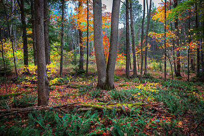 Photograph -  Fall Foliage George W Childs National Park Painted  by Rich Franco