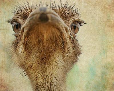 Ostrich Digital Art -  Ostrich Closeup by Terry Fleckney