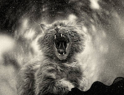 Sepia Tone Photograph - ******* by Svetlana Melik-nubarova
