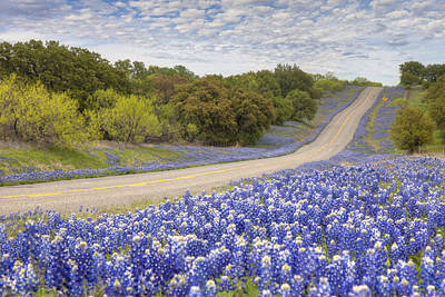 Bluebonnets Photograph -  Texas Bluebonnet Highway - Texas Hill Country by Rob Greebon