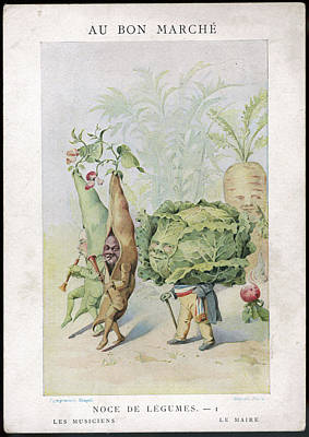 Cabbage Drawing -  The Vegetable Wedding No by Mary Evans Picture Library