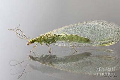 Chrysopidae Photograph - 03 Common Green Lacewing by Jivko Nakev