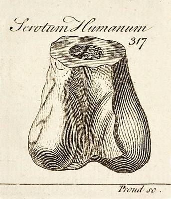 Darwin Fossils Photograph - 1763 Dinosaur Bone Misidentified Scrotum by Paul D Stewart