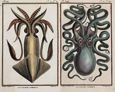 Squids Photograph - 1801 Montfort Squid Octopus Engraving by Paul D Stewart