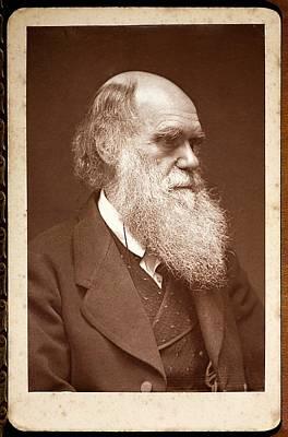 Charles Darwin Photograph - 1874 Charles Darwin Photograph Portrait by Paul D Stewart