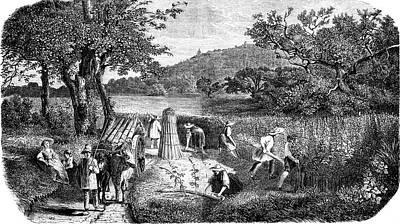 19th Century Hemp Farming Art Print