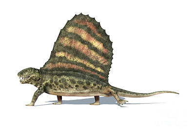 Bass Digital Art - 3d Rendering Of A Dimetrodon Dinosaur by Leonello Calvetti