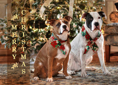 Canines Digital Art - A Bubba And Kensie Christmas by Shelley Neff