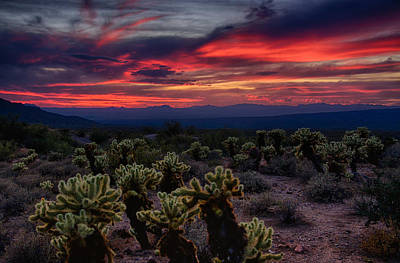 Photograph - A Cholla Sunset  by Saija  Lehtonen