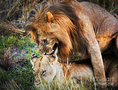 A Couple Of Lions Breed On Savanna Serengeti. Tanzania. Africa Art Print by Michal Bednarek