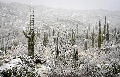 Rincon Photograph - A Desert Snow Day  by Saija  Lehtonen