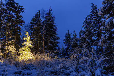 Christmas Holiday Scenery Photograph - A Festive Mountain Hemlock Evergreen by Kevin Smith