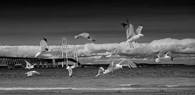 Fashion Paintings Rights Managed Images - A Flock of Gulls by the Straits of Mackinac Royalty-Free Image by Randall Nyhof