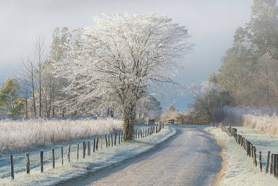 Winter Trees Photograph - A Frosty Morning by Chris Moore