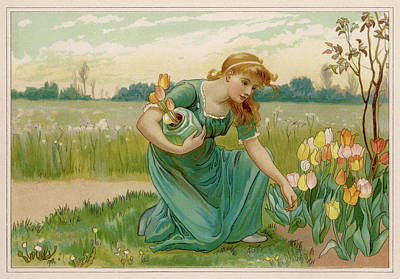 Tulip Drawing - A Girl Picking Tulips          Date by Mary Evans Picture Library