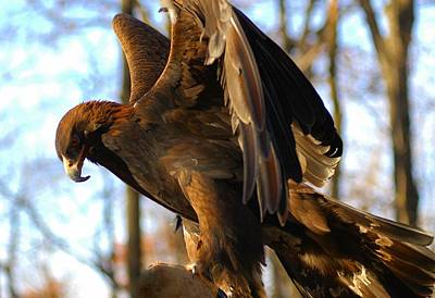 Photograph - A Golden Eagle by Raymond Salani III