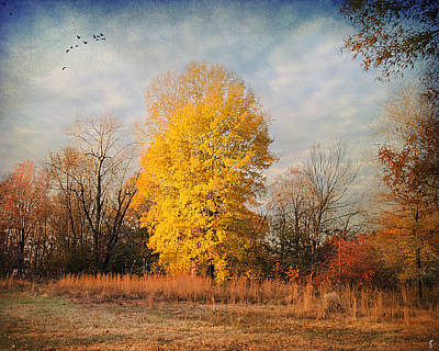 Autumn Scene Photograph - A Golden Moment by Jai Johnson