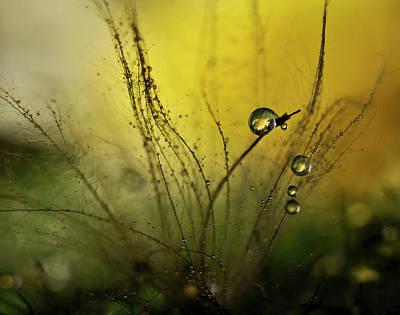 Awakening Wall Art - Photograph - A Golden Morning Shower by Heidi Westum