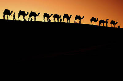 Camel Photograph - A Group Of Camel Herders by Piper Mackay