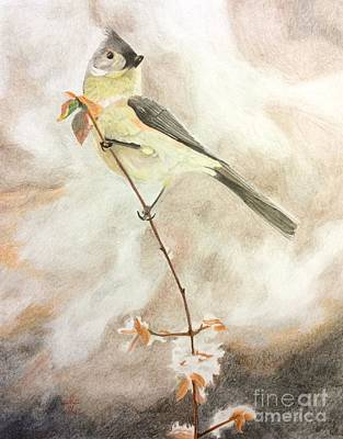 Tufted Titmouse Drawing - A Lonely Lady Tuft  by Ambre Wallitsch
