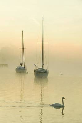 Mute Swan Photograph - A Misty Morning Over Lake Windermere by Ashley Cooper